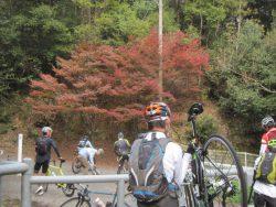 公園藤ノ木自然 084